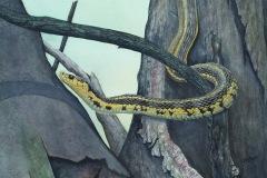 Jerome01_Pretty-in-Yellow_watercolour_11x14