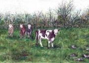 Kitley Cows