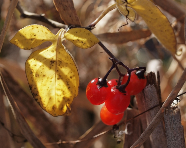Fall Berries