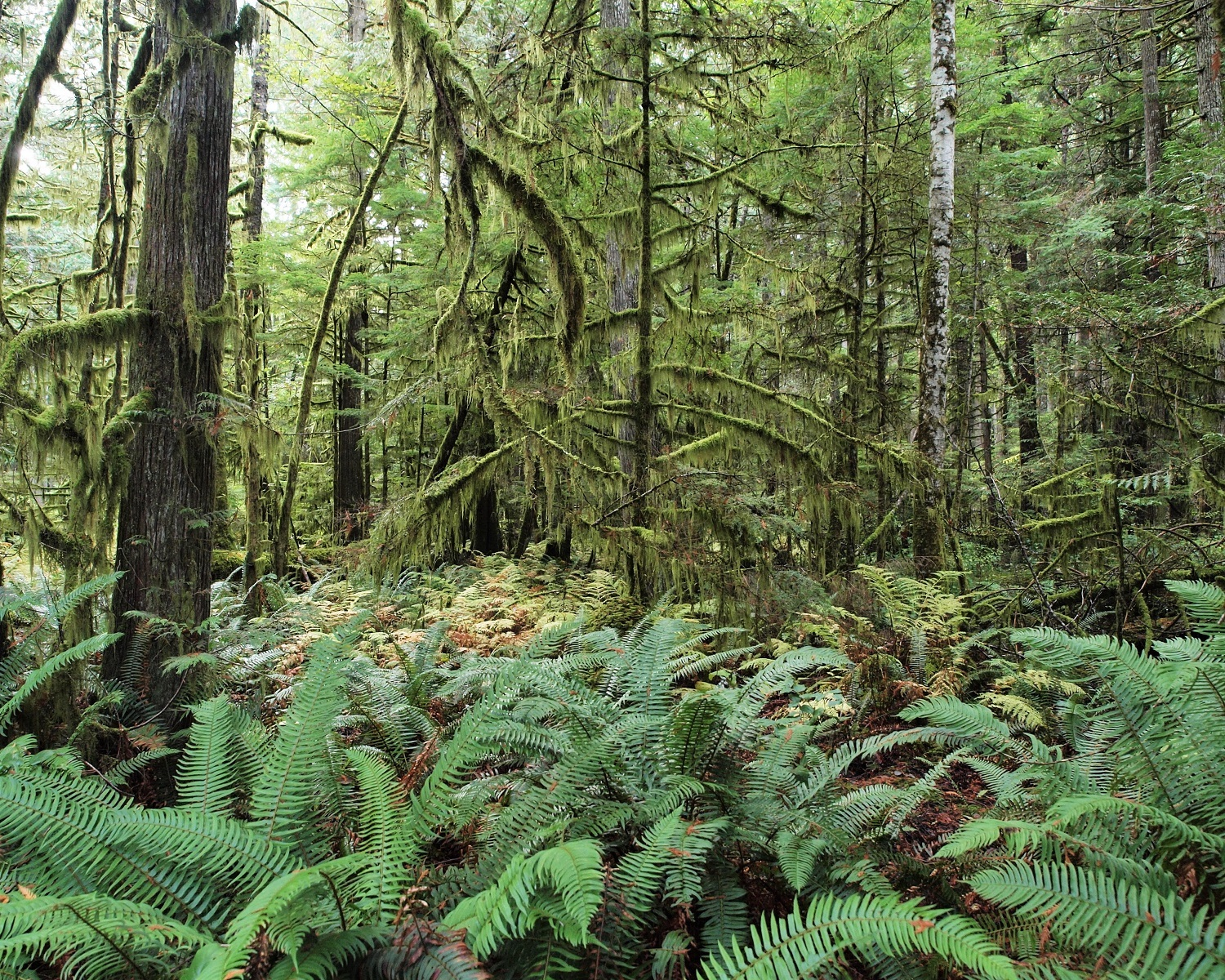 16099 Pacific Coast Forest