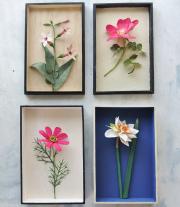 Nicotiana Rose Cosmos and Daffodil