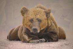 Bear Pose