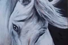 Walters - Andalusian - oil, 24x36